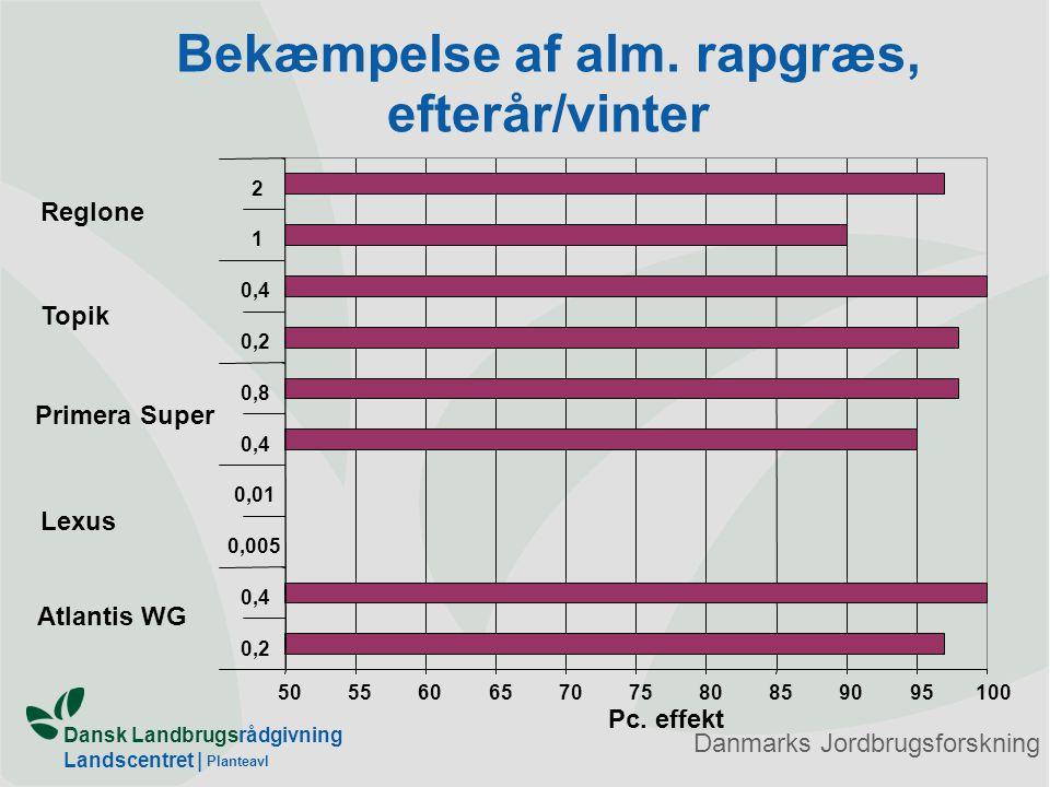 Bekæmpelse af alm. rapgræs, efterår/vinter