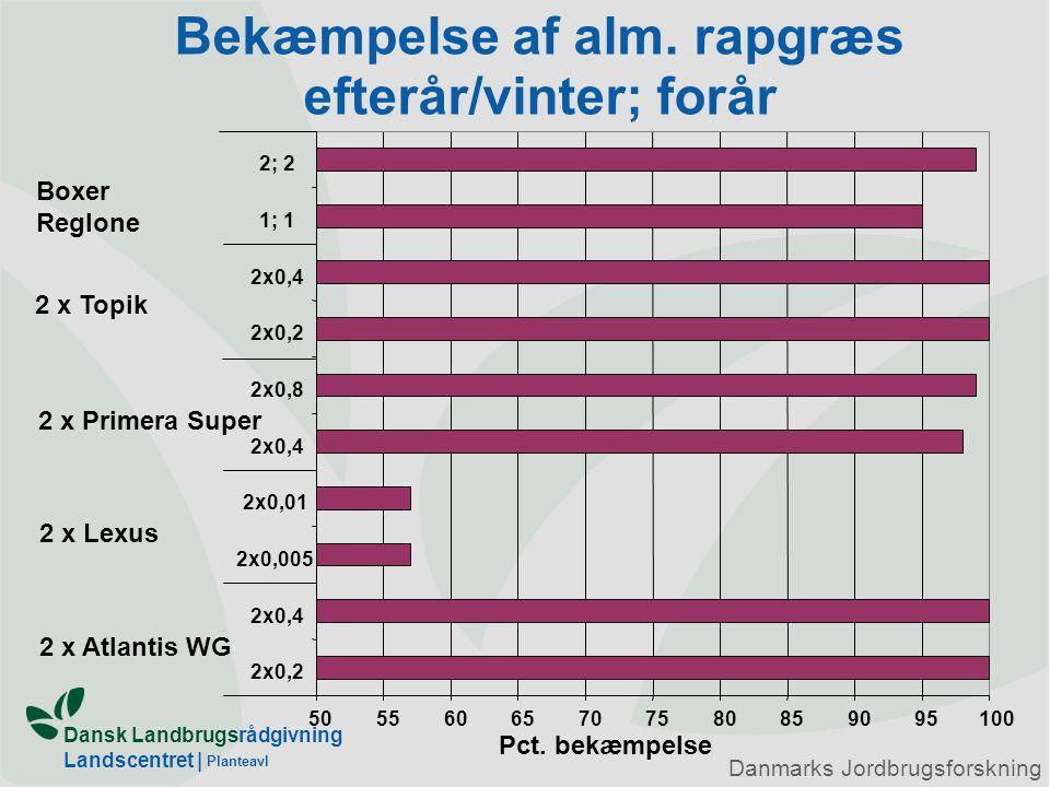 Bekæmpelse af alm. rapgræs efterår/vinter; forår