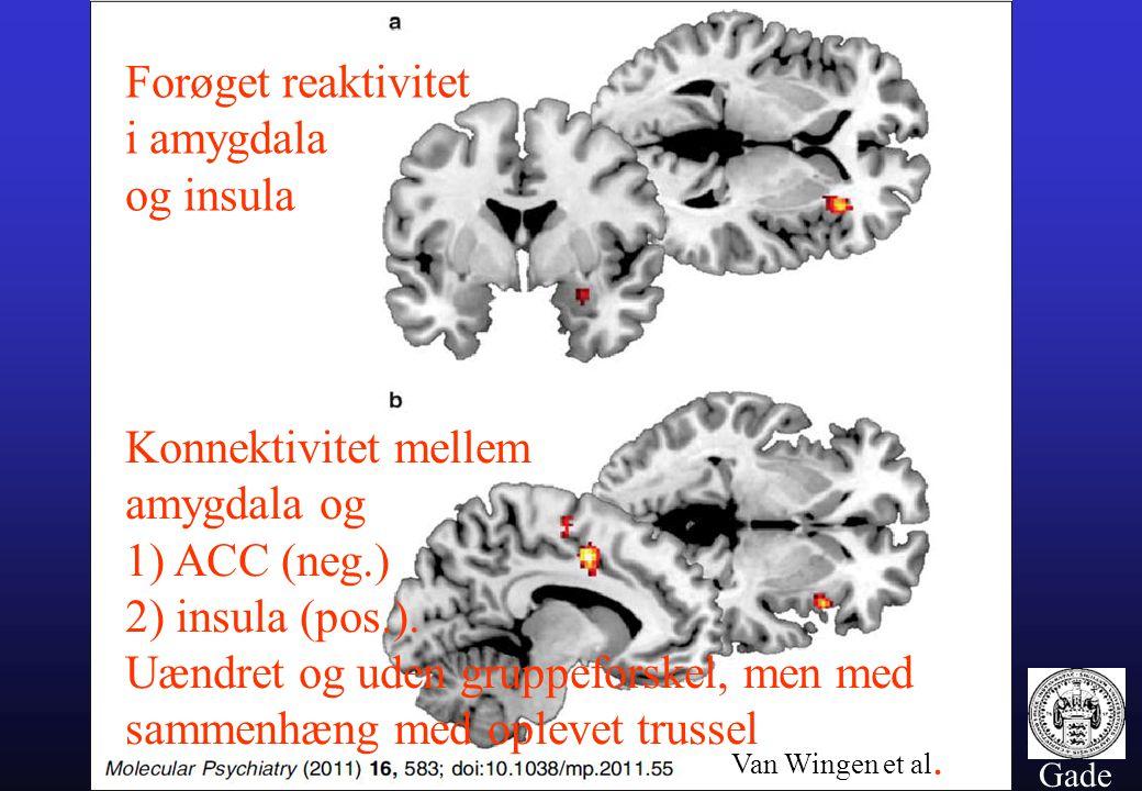 Konnektivitet mellem amygdala og 1) ACC (neg.)
