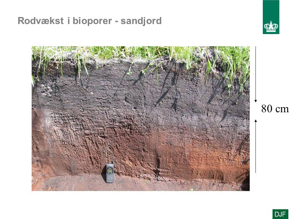 Rodvækst i bioporer - sandjord