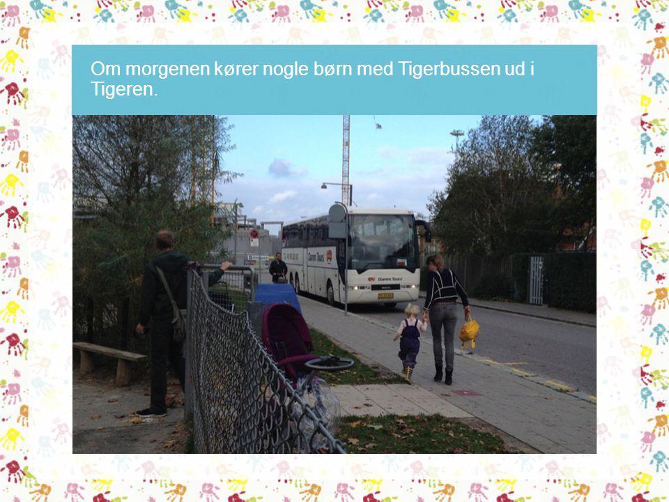 Om morgenen kører nogle børn med Tigerbussen ud i Tigeren.