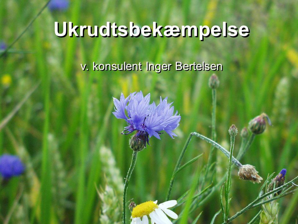 v. konsulent Inger Bertelsen