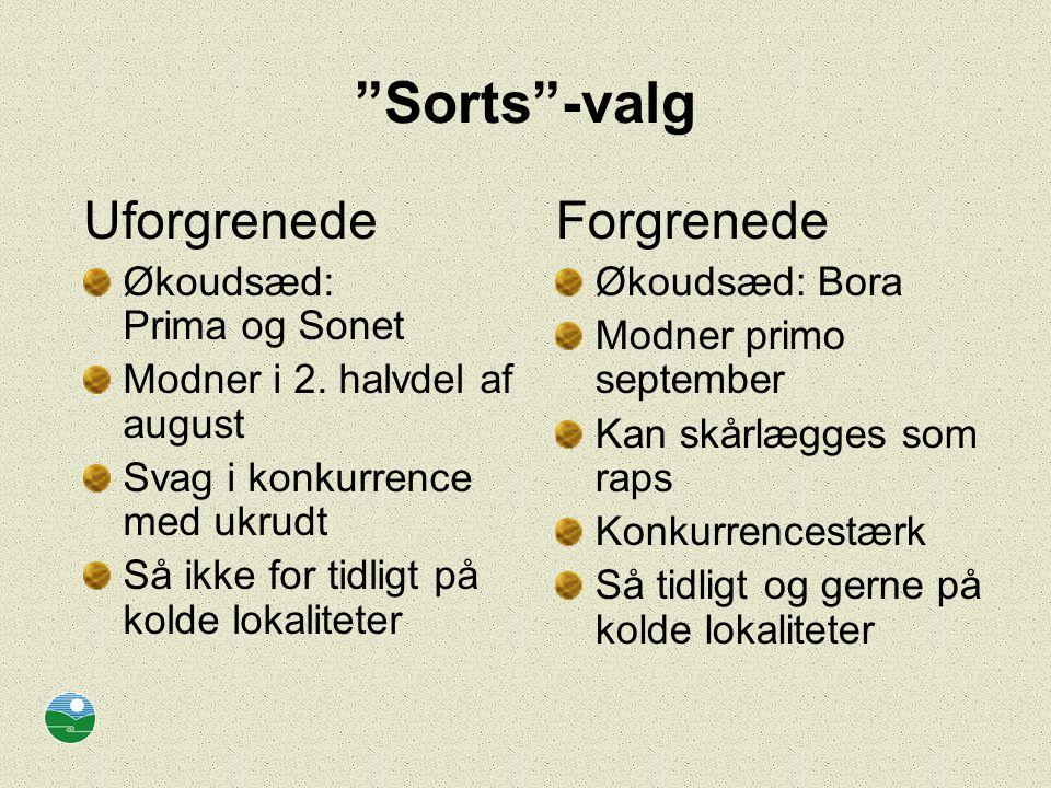 Sorts -valg Uforgrenede Forgrenede Økoudsæd: Prima og Sonet