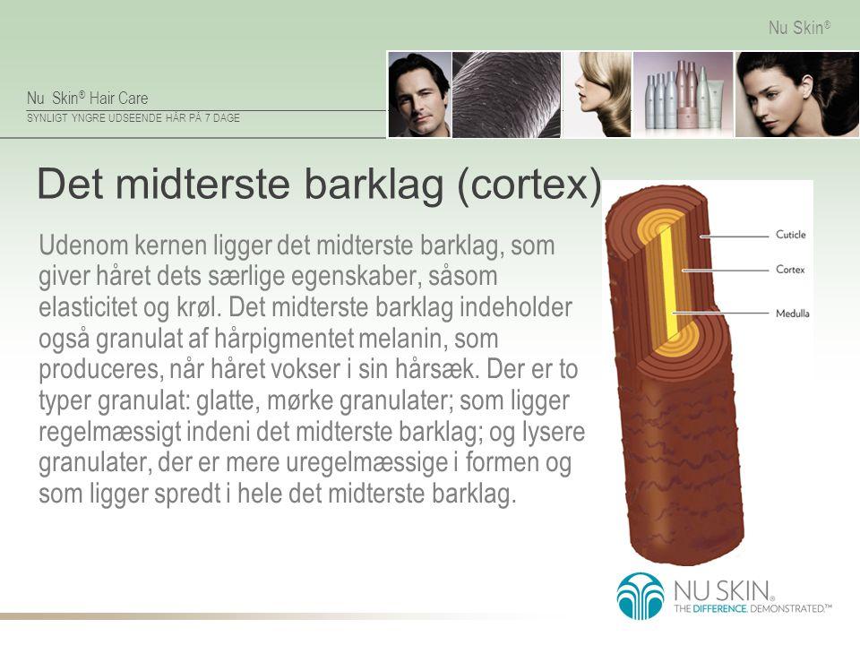 Det midterste barklag (cortex)