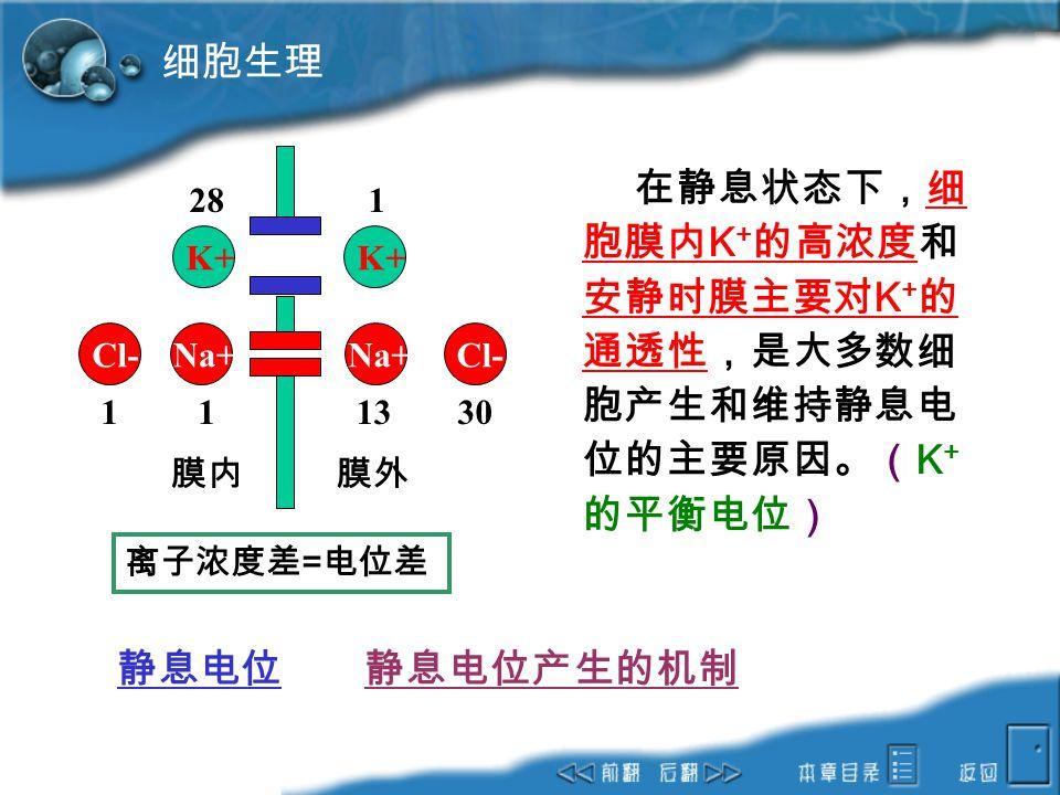 细胞生理 静息电位 静息电位产生的机制 K+ Na+ Cl- 膜内 膜外 28 1 13 30 离子浓度差=电位差