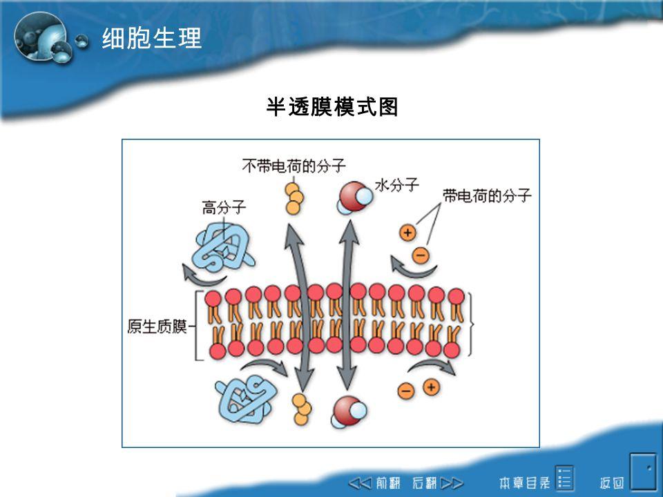 细胞生理 半透膜模式图