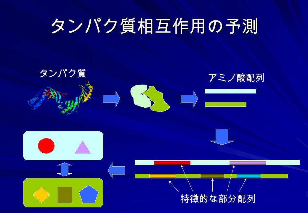 タンパク質相互作用の予測 タンパク質 アミノ酸配列 特徴的な部分配列