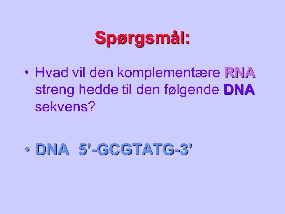 Spørgsmål: DNA 5'-GCGTATG-3'