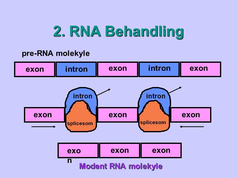2. RNA Behandling pre-RNA molekyle intron exon exon exon