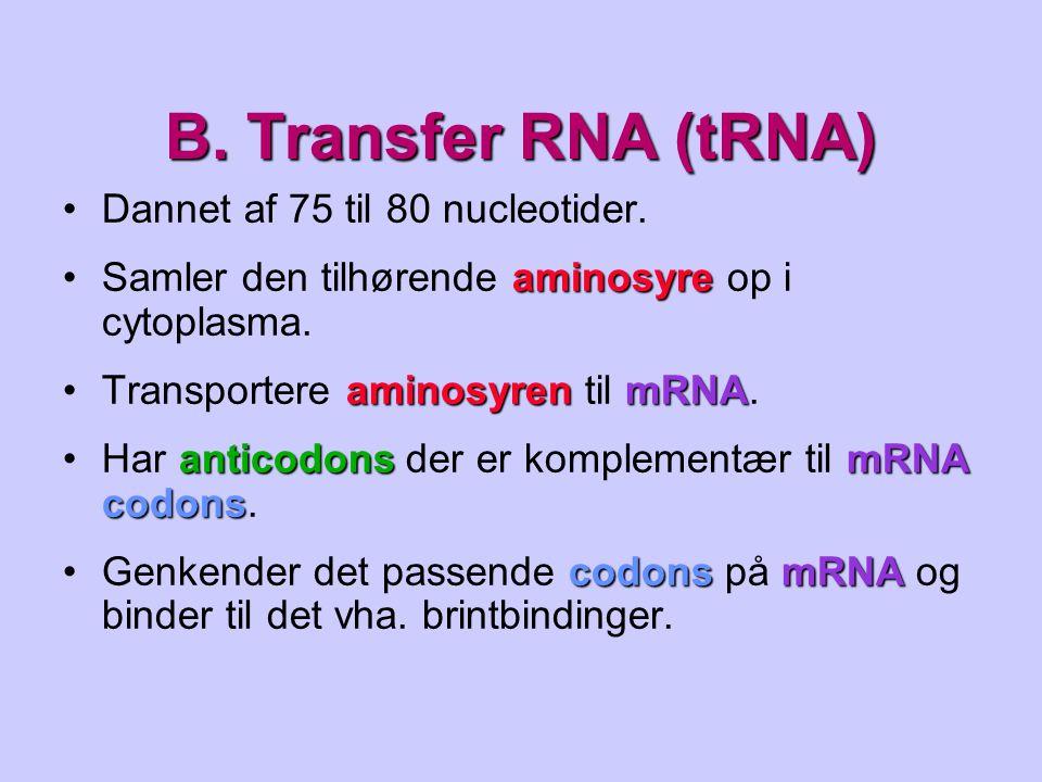 B. Transfer RNA (tRNA) Dannet af 75 til 80 nucleotider.