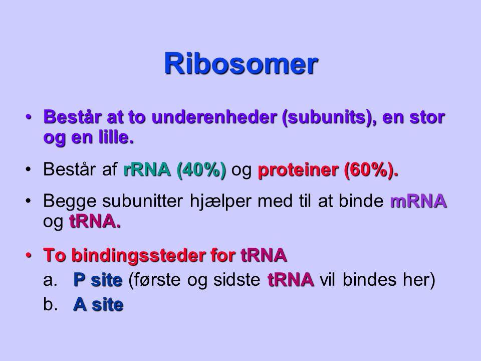 Ribosomer Består at to underenheder (subunits), en stor og en lille.