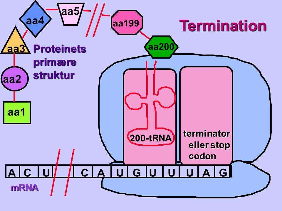 Termination aa5 aa4 aa3 Proteinets primære struktur aa2 aa1 A C U C A
