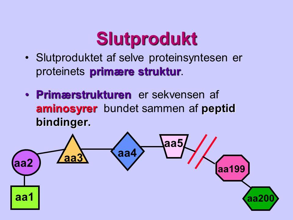 Slutprodukt Slutproduktet af selve proteinsyntesen er proteinets primære struktur.