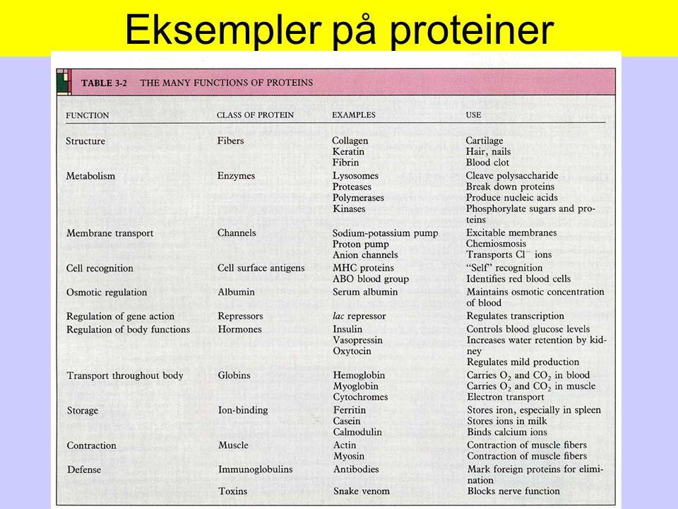 Eksempler på proteiner