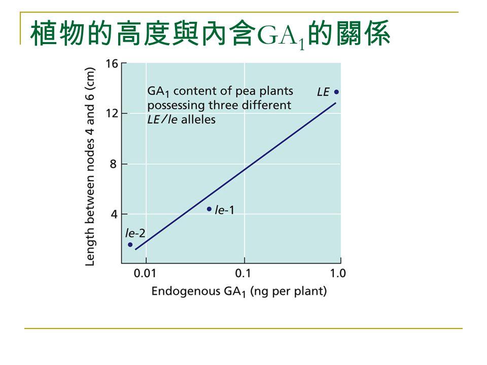植物的高度與內含GA1的關係