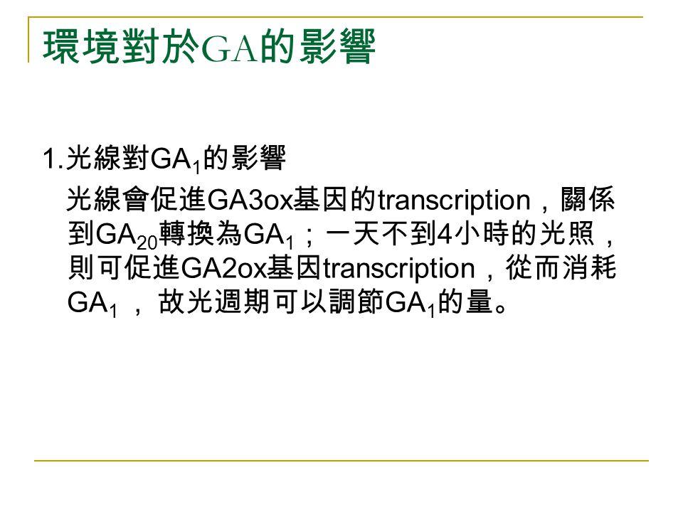 環境對於GA的影響 1.光線對GA1的影響.