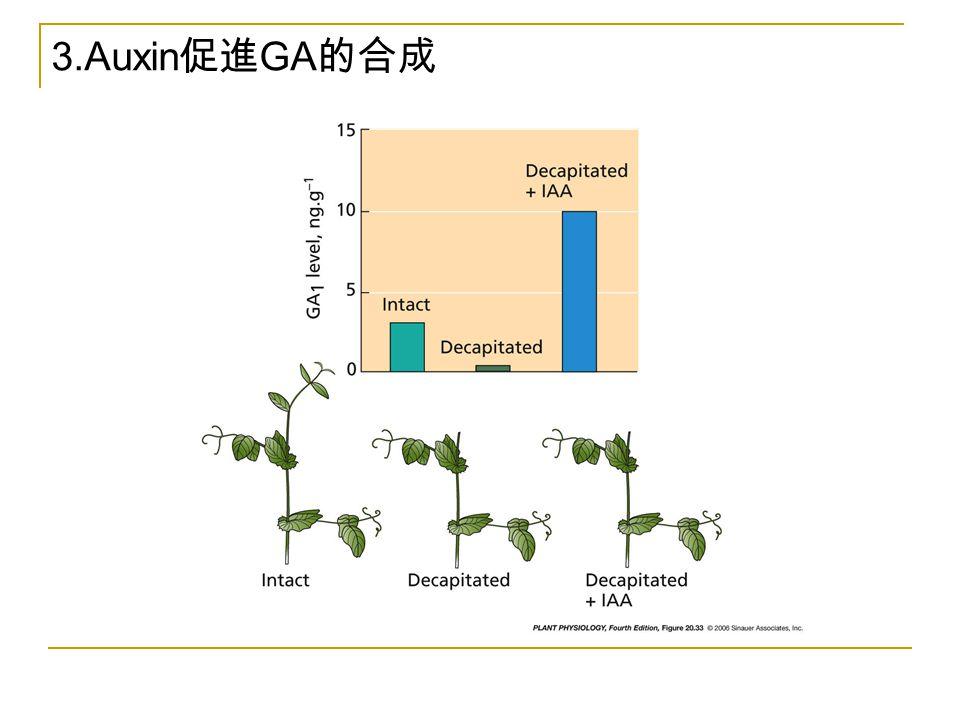 3.Auxin促進GA的合成