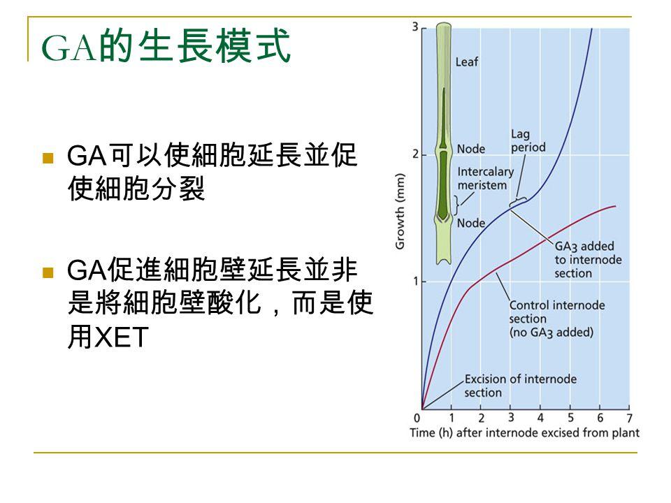 GA的生長模式 GA可以使細胞延長並促使細胞分裂 GA促進細胞壁延長並非是將細胞壁酸化,而是使用XET