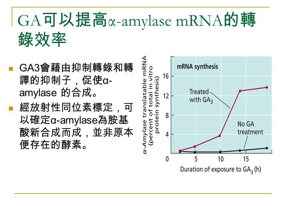 GA可以提高α-amylase mRNA的轉錄效率