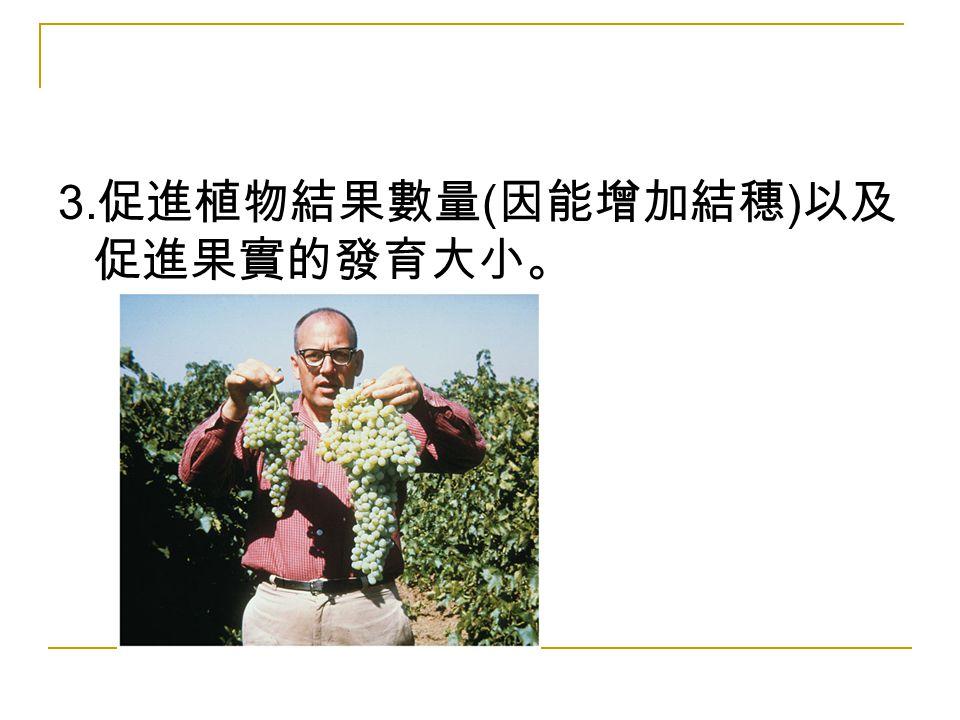 3.促進植物結果數量(因能增加結穗)以及促進果實的發育大小。