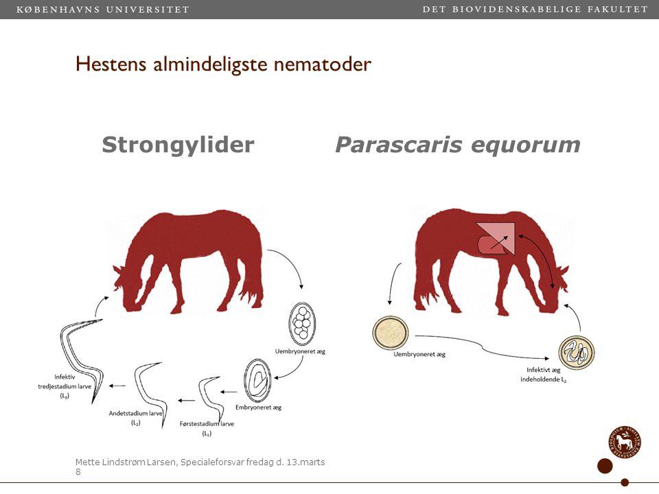 Hestens almindeligste nematoder