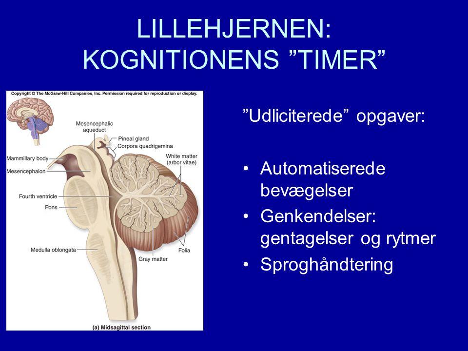 LILLEHJERNEN: KOGNITIONENS TIMER