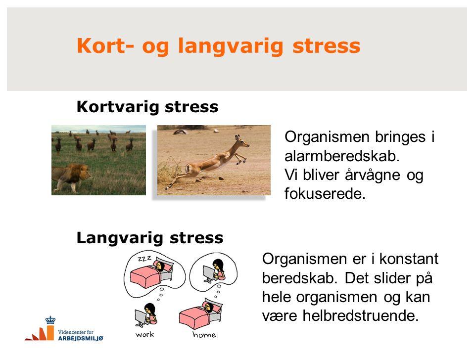 Kort- og langvarig stress