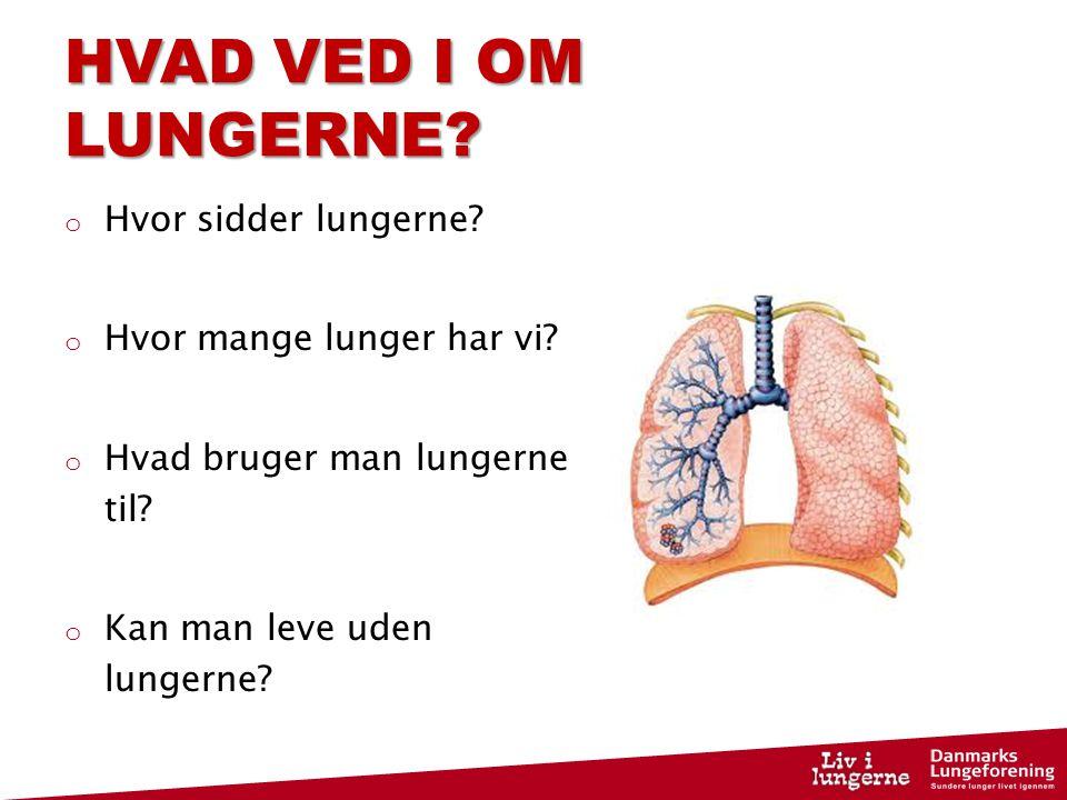 HVAD VED I OM LUNGERNE Hvor sidder lungerne