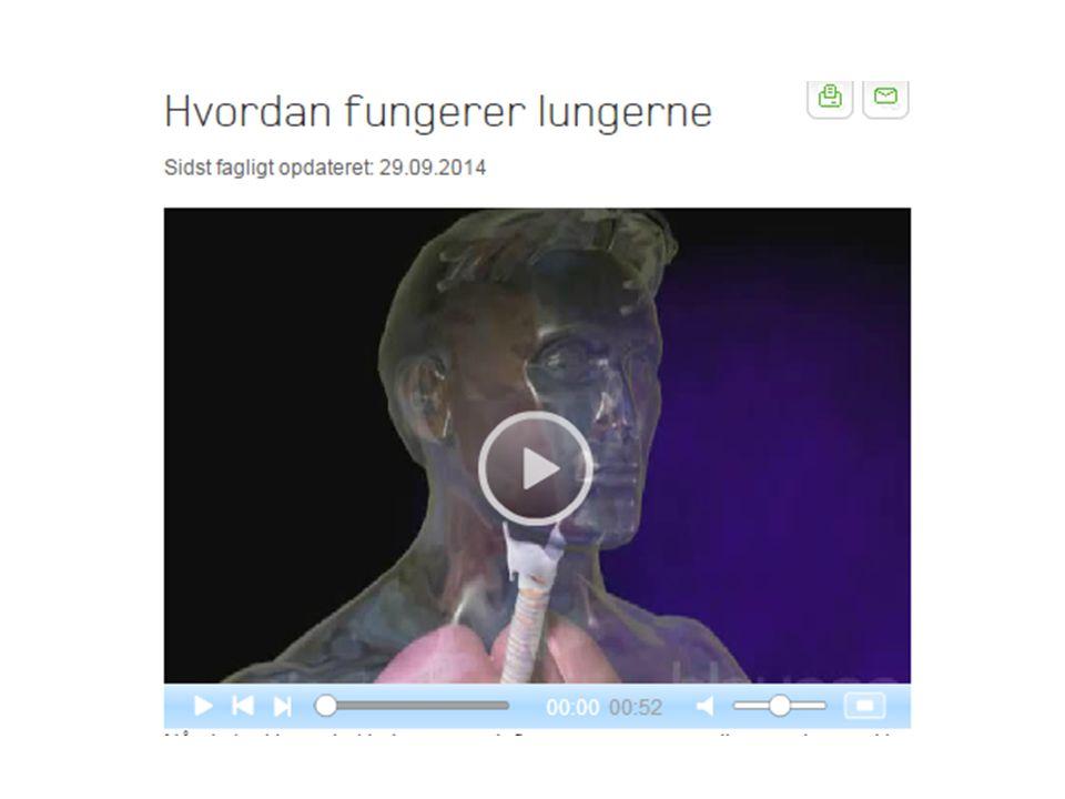 Evt. vis denne video om hvordan lungerne fungerer: https://www.sundhed.dk/borger/sygdomme-a-aa/lunger/illustrationer/animationer/hvordan-fungerer-lungerne/.