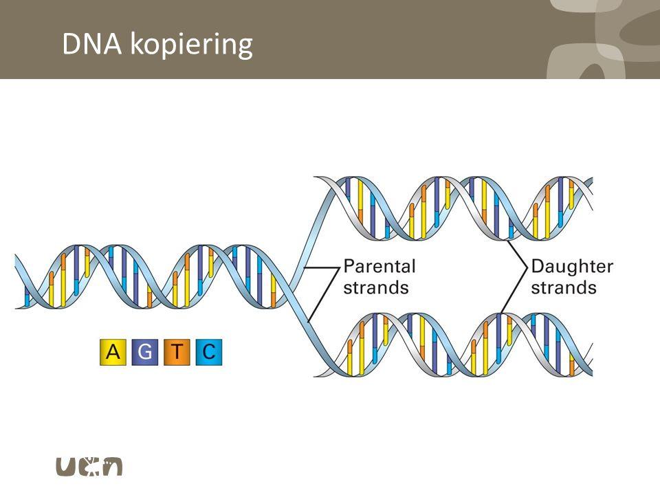 DNA kopiering