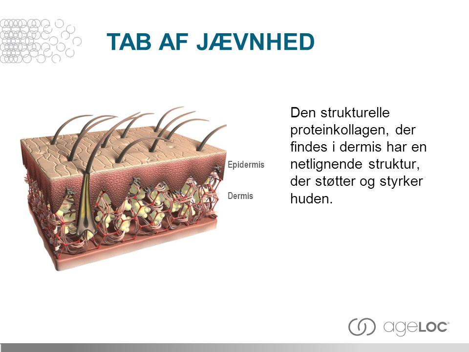 TAB AF JÆVNHED Den strukturelle proteinkollagen, der findes i dermis har en netlignende struktur, der støtter og styrker huden.