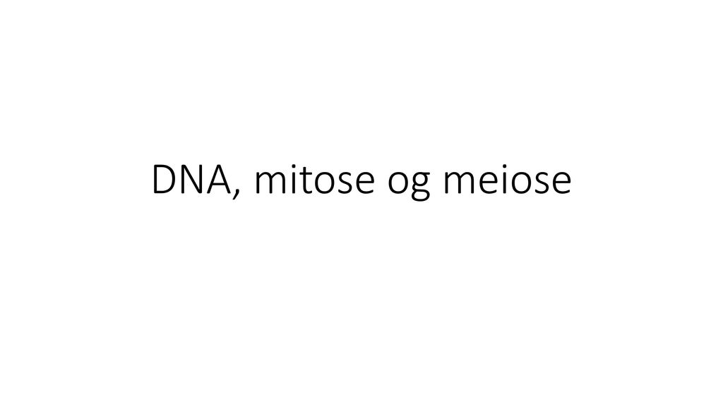 DNA, mitose og meiose