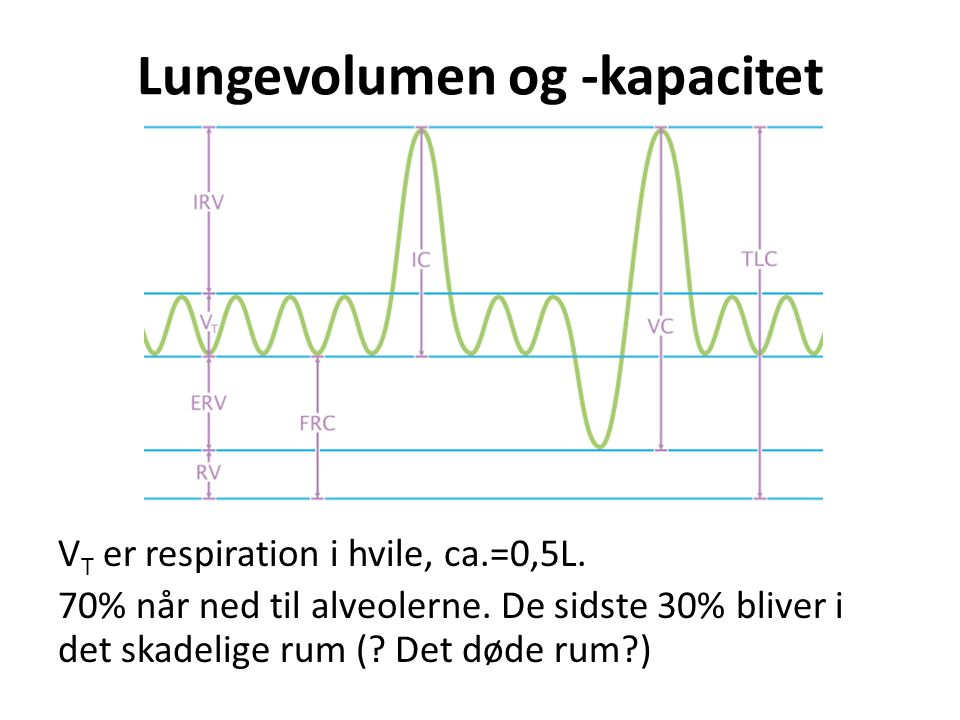 Lungevolumen og -kapacitet